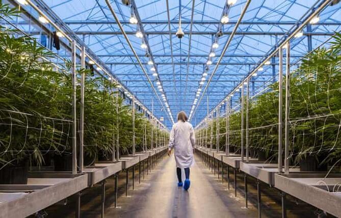 Market Cannabis in Canada